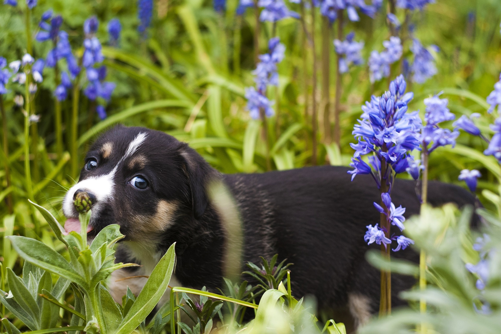 Puppy in a sensory garden for dogs