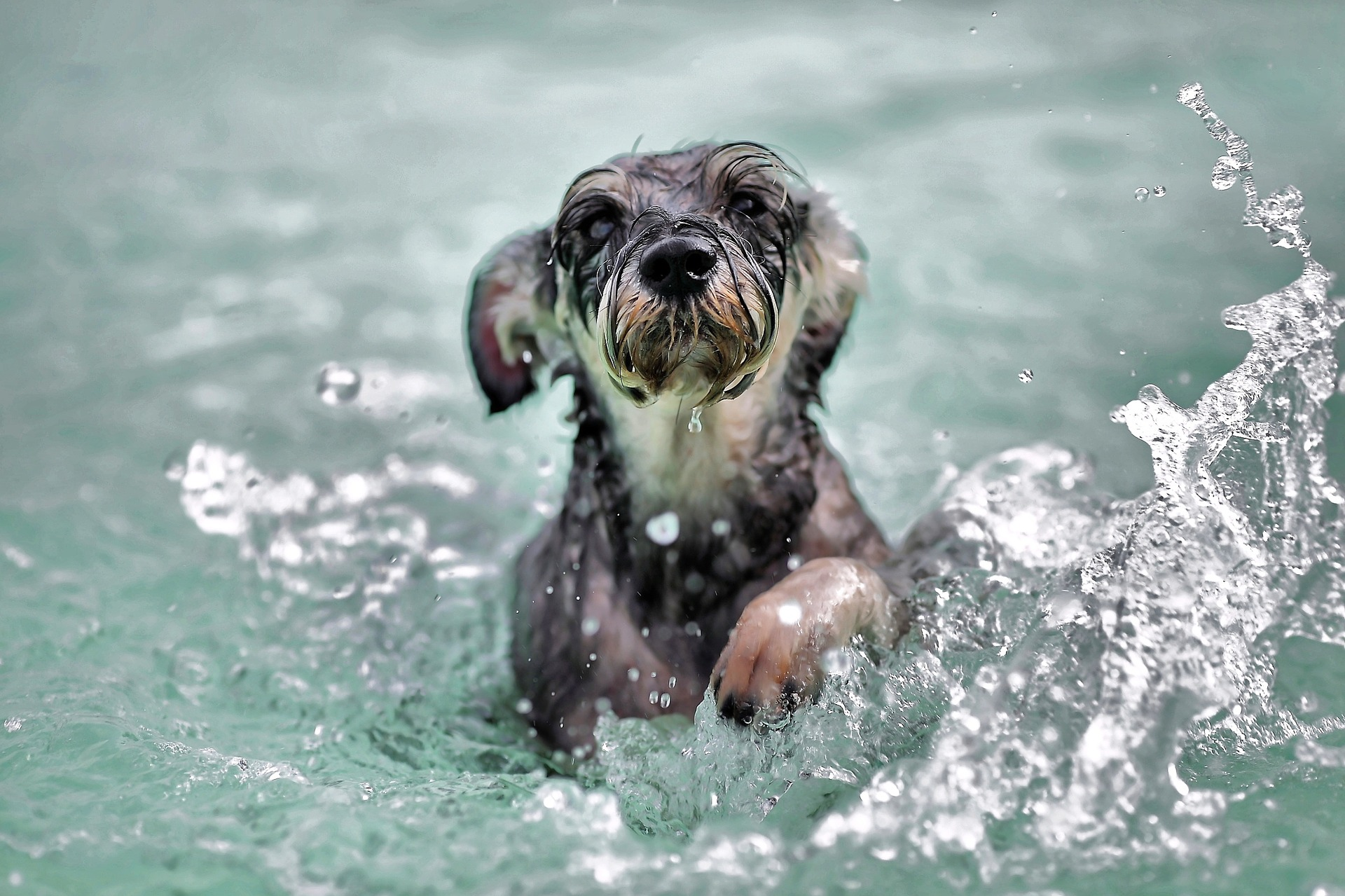 Swimming is a great way to keep a dog cool in the summer