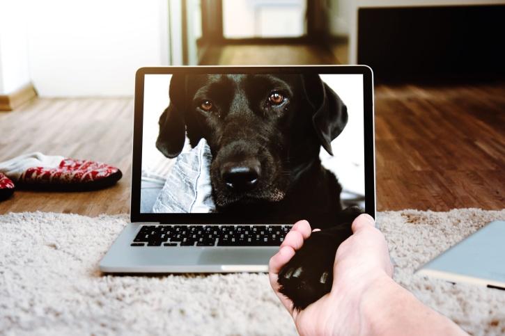 Dog on laptop screen