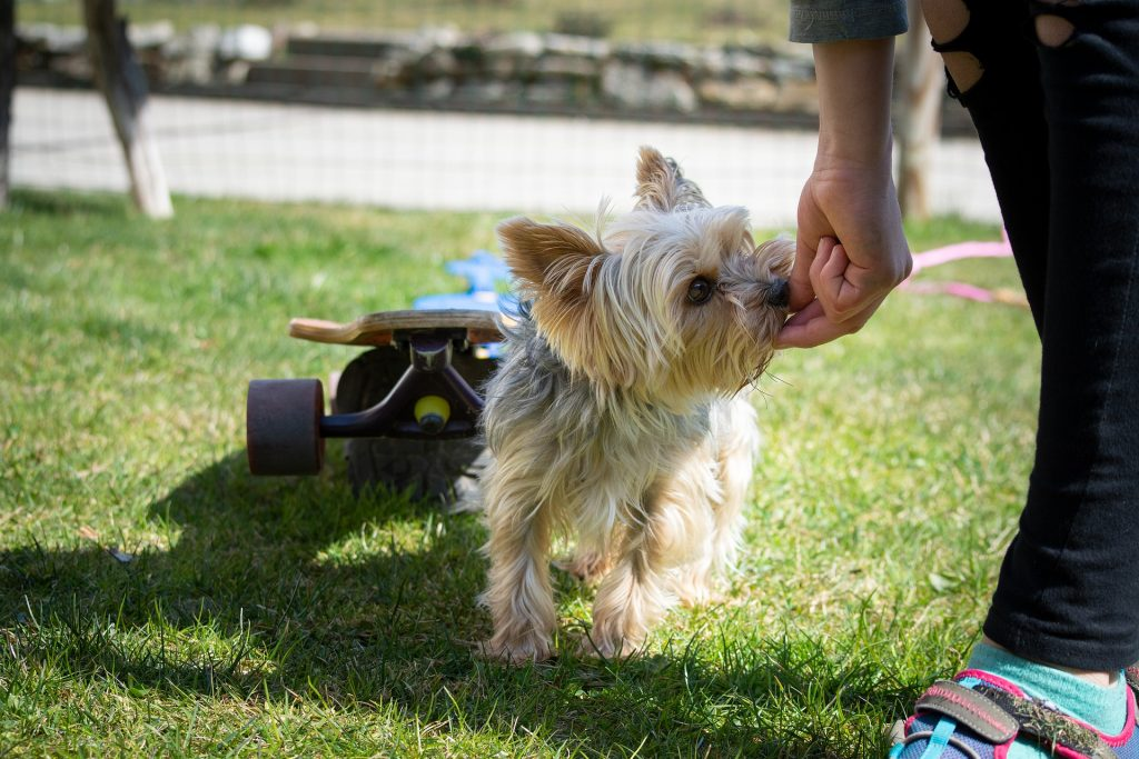 Person training small dog