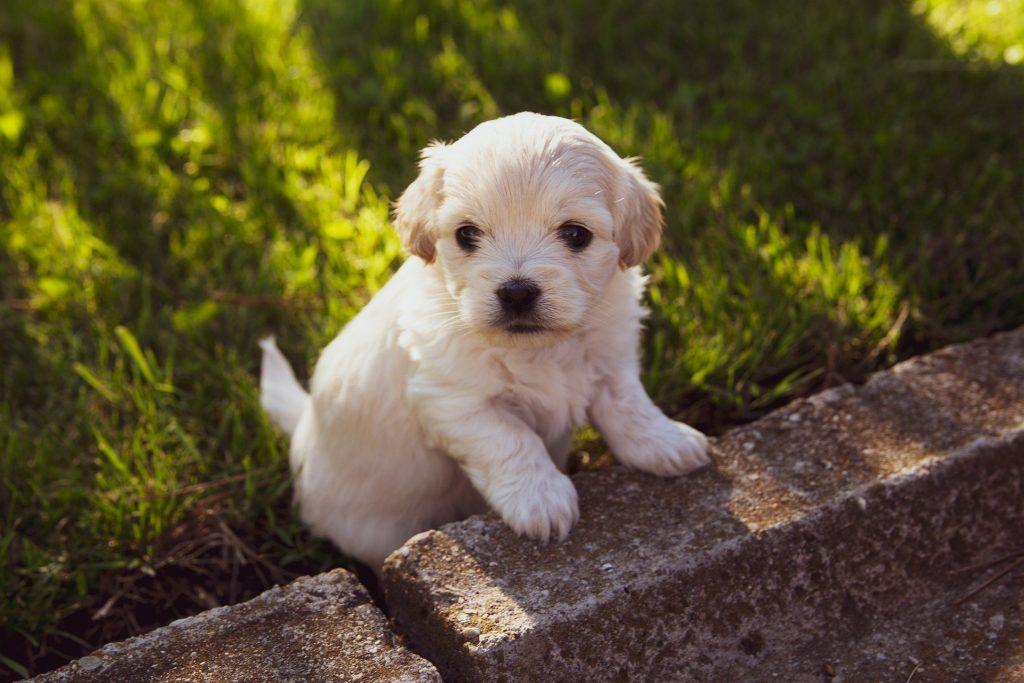Puppy climbing onto wall
