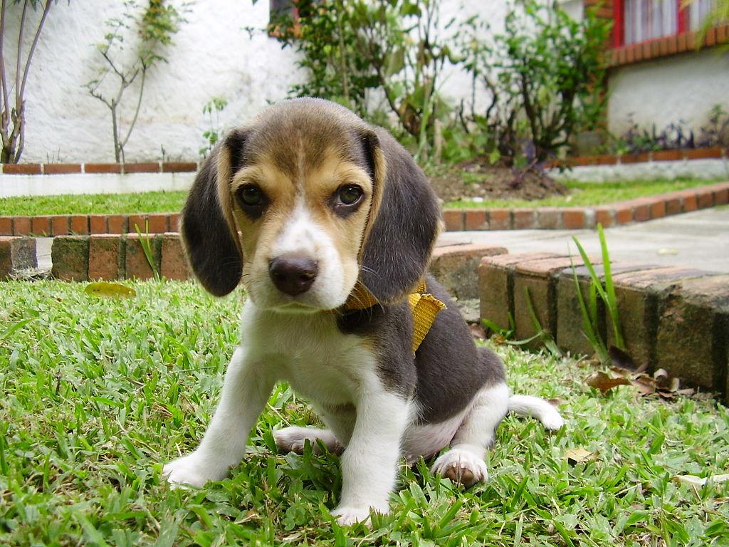Puppy sitting on grass