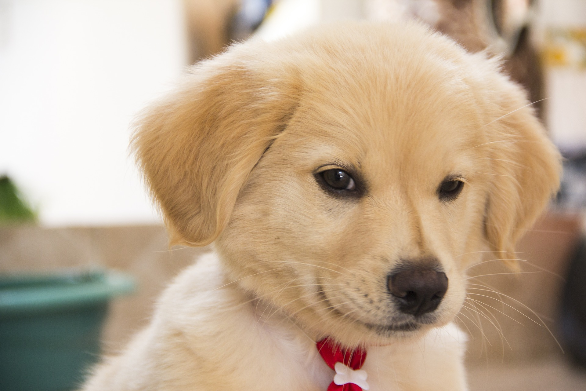 Puppy's face