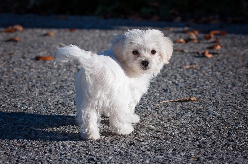 Puppy turning head to camera