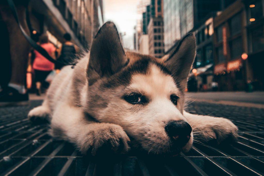 Dog lying down on street